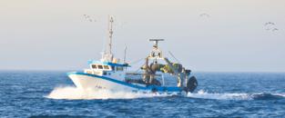 act_37_pesca