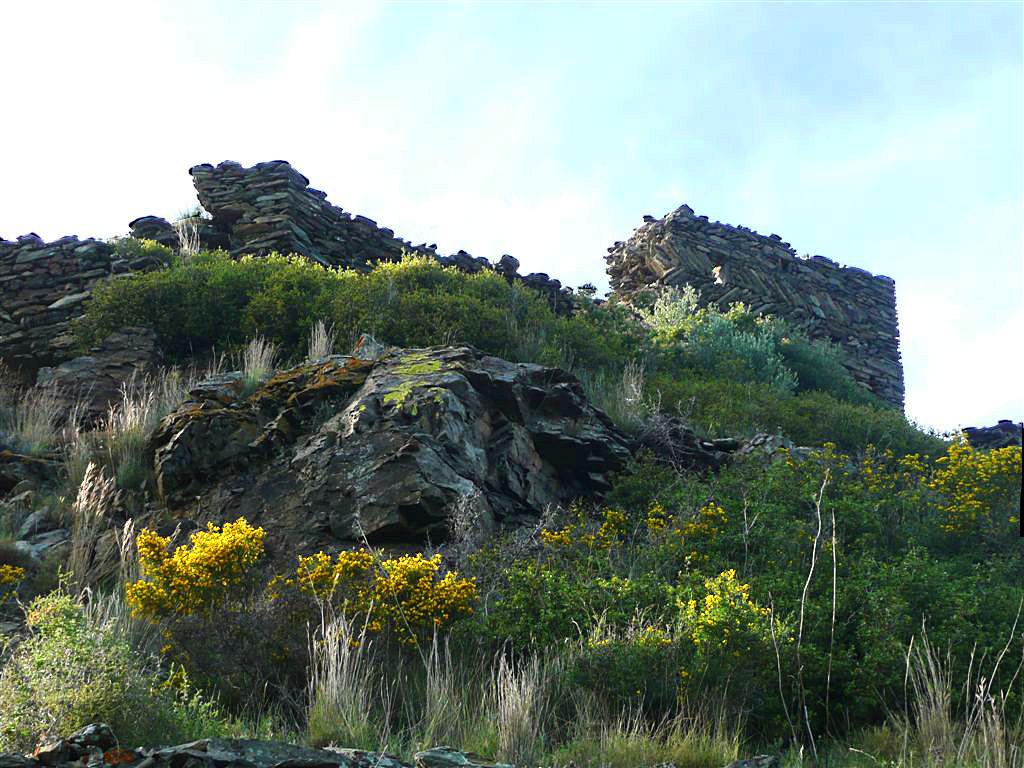Bufalaranya01